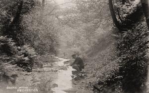 Deyne Wood, Netherton.jpg