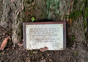 Plaque at the base of the sycamore tree planted by the Duchess of Albany in Beaumont Park.