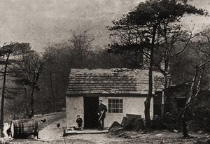 Butternab Wood, c1890.jpg