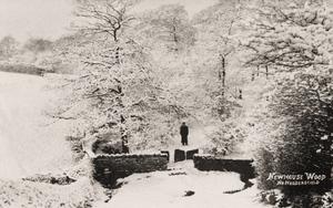 Newhouse Wood, near Huddersfield.jpg
